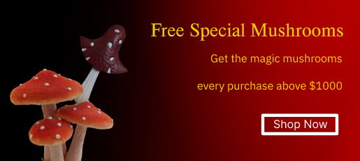 Free special Mushrooms