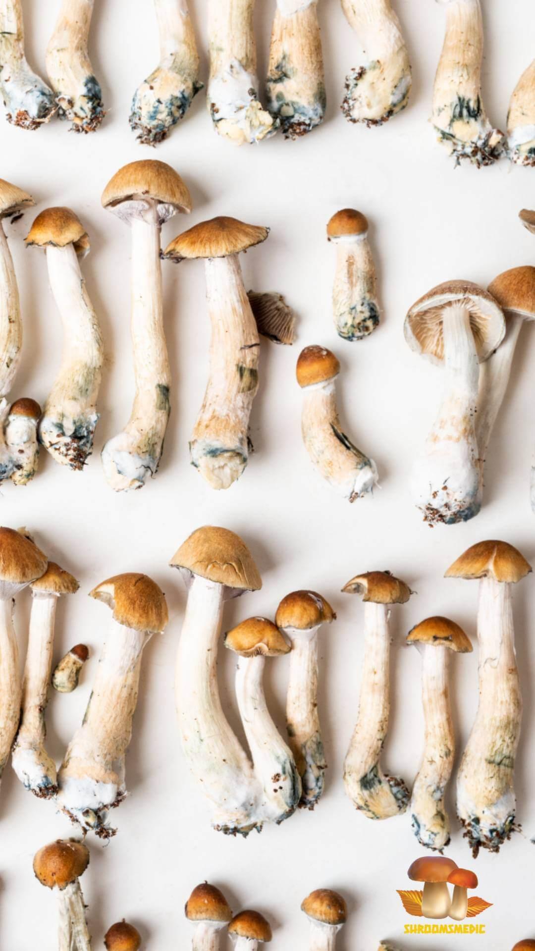 Dried Magic shrooms for sale at mushroom medication