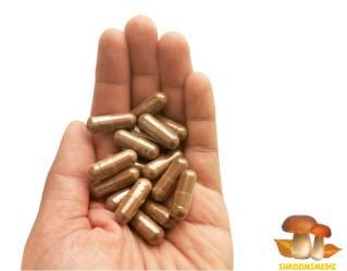 Lingzhi mushroom or Reishi mushroom supplement capsules