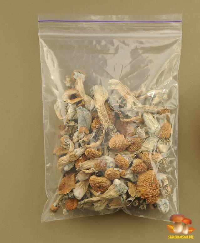 micro dosing and dried magic mushrooms