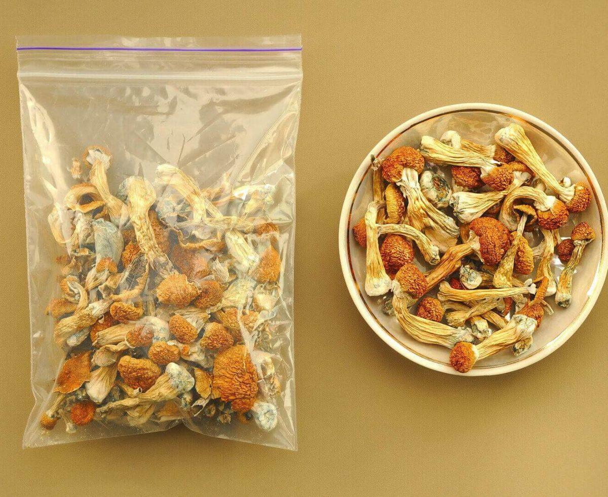 buy Psilocybin Psilocybe Cubensis mushrooms Golden Teacher